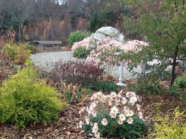 perennials in bloom